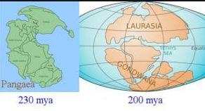 .  Teori Laurasia-Gondwana