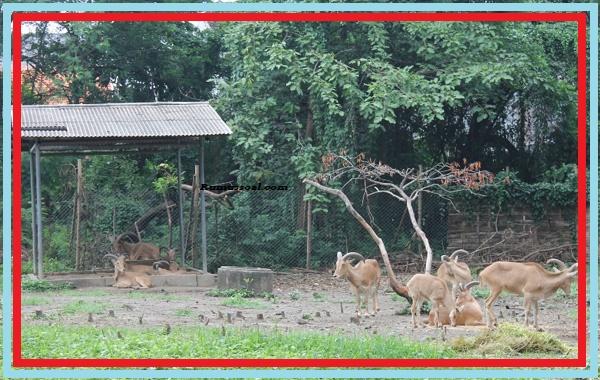 Ekosistem-Kebun-Binatang