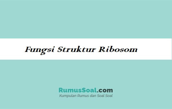 Fungsi-Struktur-Ribosom