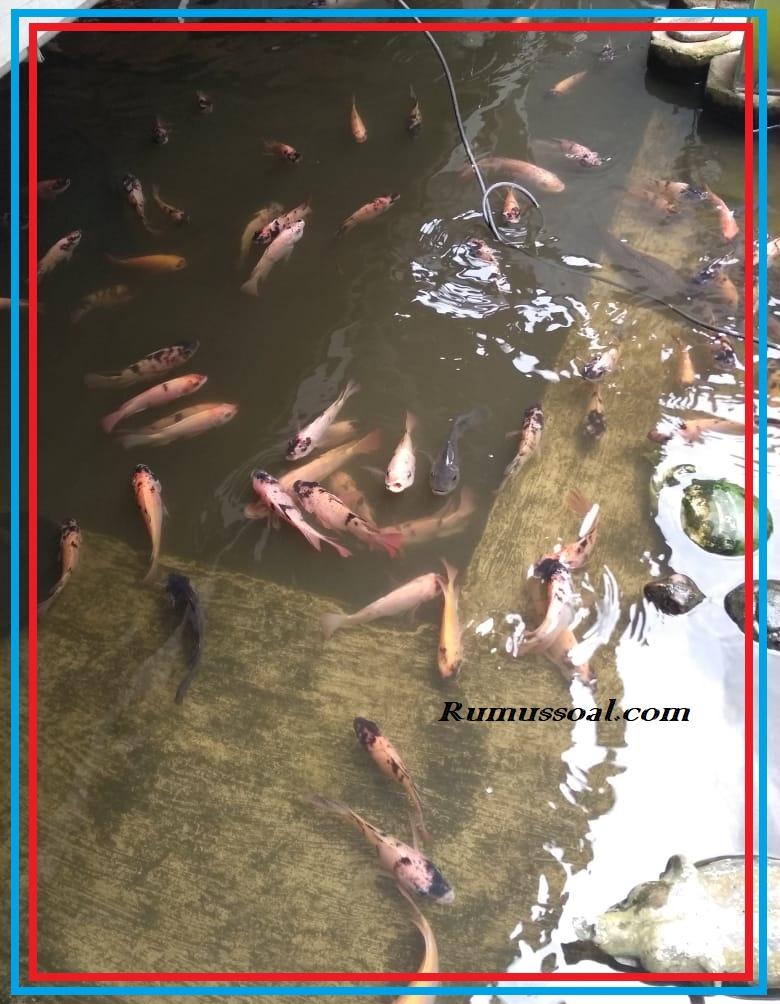 Kolam-Ikan