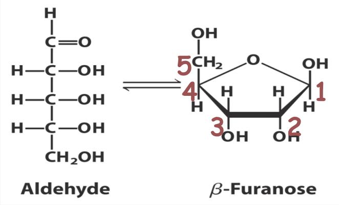 struktur asam nukleat