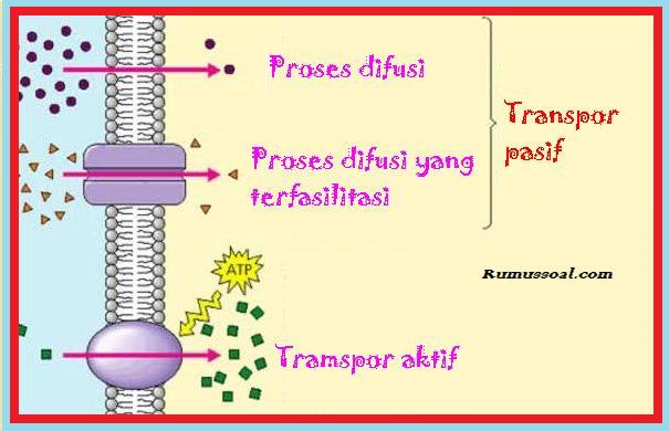 Sistem-Transport-Membran