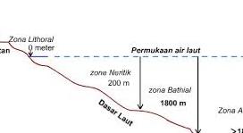 Zona-Neritic-1