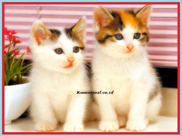 15 Tafsir mimpi kucing melahirkan togel info