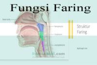 Fungsi Faring