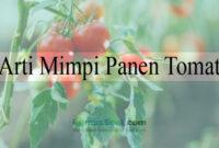 Arti Mimpi Panen Tomat