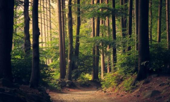 Arti Mimpi Tentang Hutan2