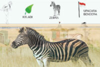 Kode Alam Mimpi Zebra