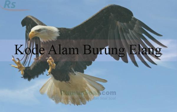 Mimpi menembak burung elang togel