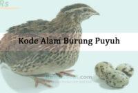 Kode Alam Burung Puyuh
