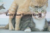 Kode Alam Kucing Kawin